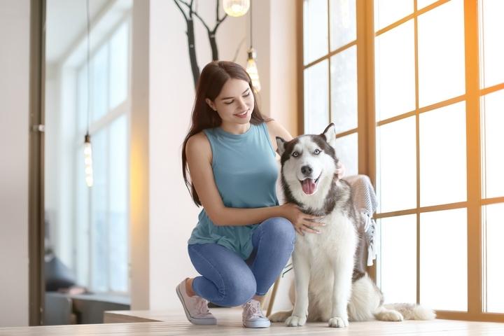 Siberian Husky Dog 201803-002